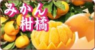 【産地直送JAタウン】みかん(柑橘)
