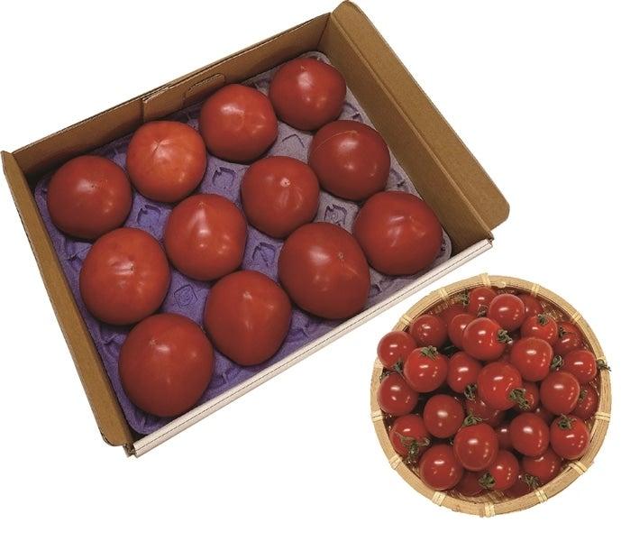 【桃太郎】天然地下水育ちのトマト・ミニトマト詰め合わせセット
