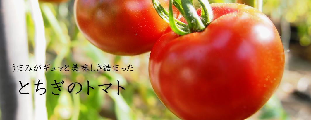 栃木県産トマト