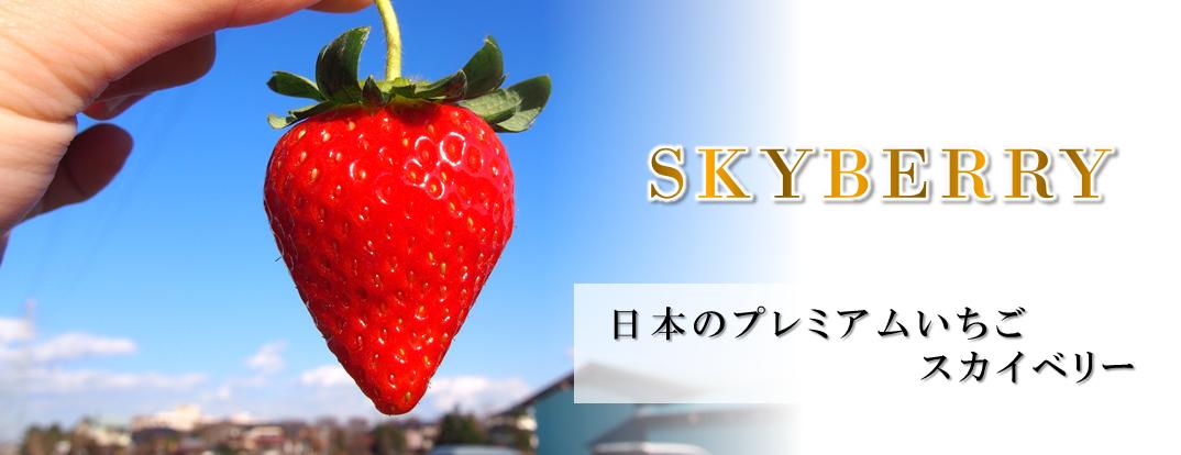 栃木県産スカイベリー
