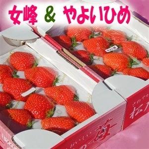 """【食べくらべ!】""""完熟""""松戸の苺☆女峰・やよいひめ☆2品種食べくらべセット!"""