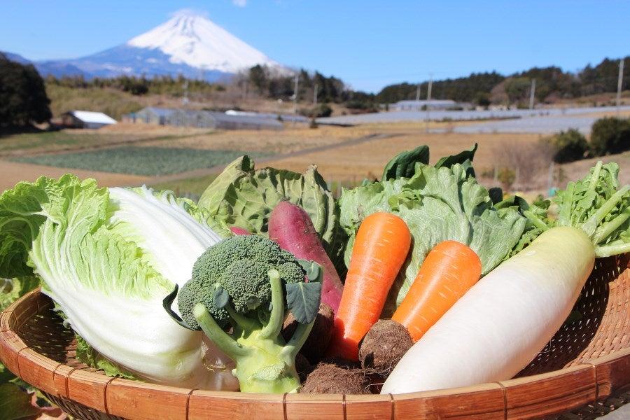 写真はセットの一例です(野菜類はその時の状況により変わることがあります)