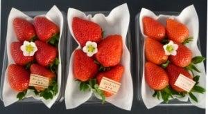 風農園 いちご食べくらべセット (紅ほっぺ & やよいひめ & おいCベリー) (化粧箱入)