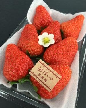 三重県産いちご 風農園 食べくらべセット (約220g×3P(化粧箱入))