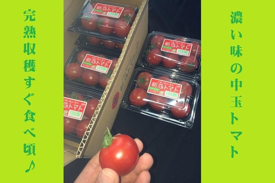 売場チョイス とってもトマト(朝恋トマト 約1.5キロ)