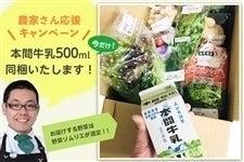 野菜ソムリエチョイス 近江の野菜BOX(ノーマル)