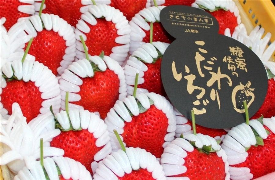 産地直送 通販 お取り寄せ糖蜜使用の「こだわりいちご」 ひのしずく: きくちのまんまJAタウン店 JAタウン