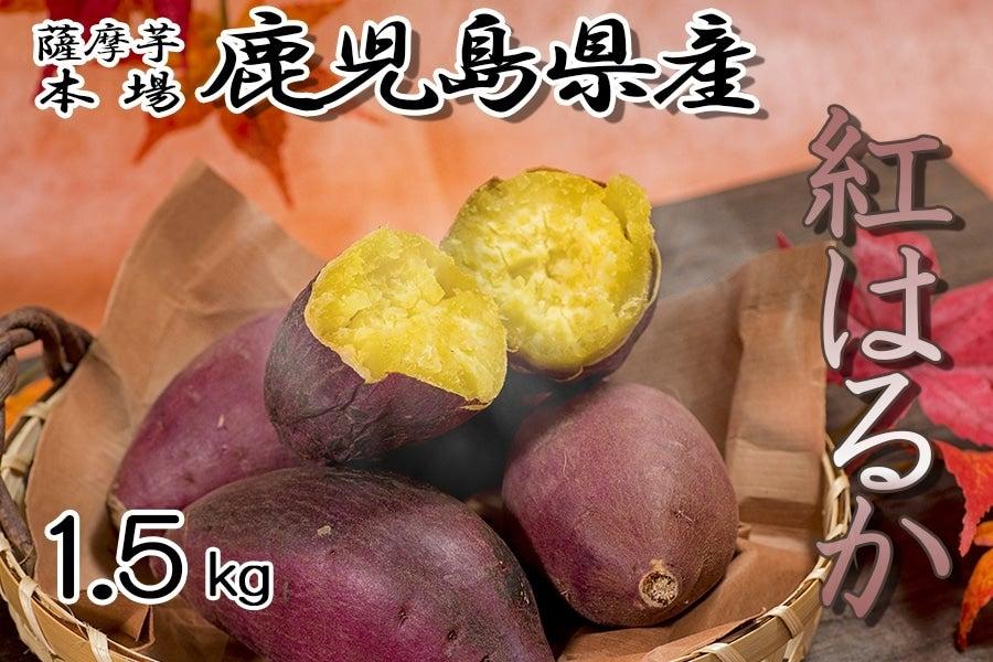<産地直送JAタウン> 【鹿児島県内でもまだまだ珍しい♪】鹿児島県産 紅はるか 約1.5kg 10/10頃〜発送