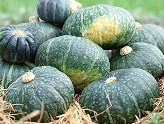 果菜(茄子・かぼちゃ・きゅうり等)
