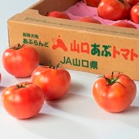 <font size=4 color=red><b>  NEW!</font></b>中国地方最大級の「夏秋トマト」産地から<font color=crimson size=4><b>「山口あぶトマト」</font></b>をお届けします!